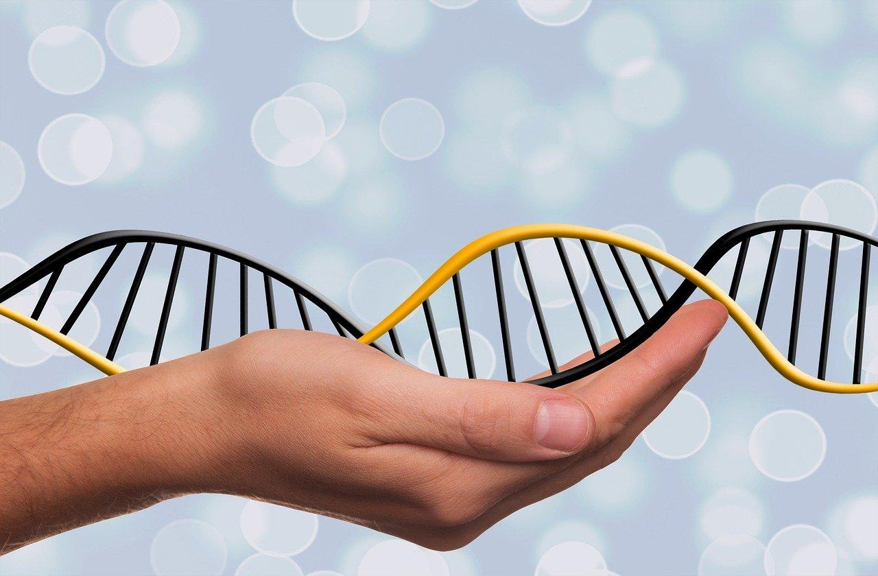 Test ADN origine : pour trouver ses origines