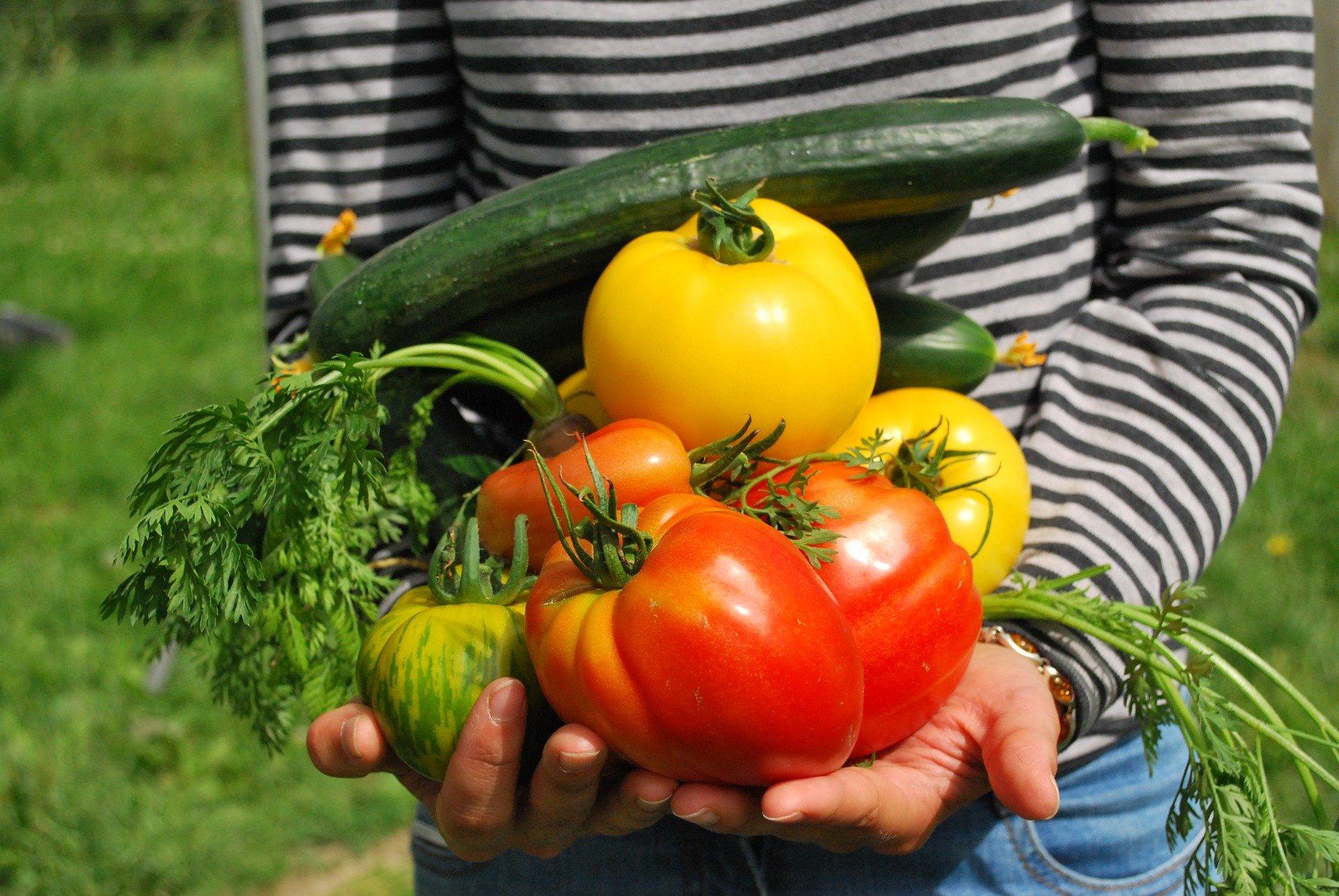 Comment commencer un jardin potager